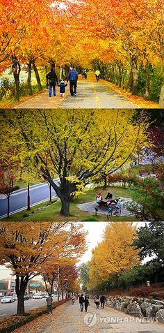 '시나브로' 걷는 아름다운 서울 단풍길 83선 : 서울시가 가족, 친구, 연인과 함께 도심 속 단풍 나들이를 할 수 있는 '아름다운 단풍길' 83곳 총 153.75㎞를 23일 소개했다. 시는 24일부터 다음 달 중순까지 83곳의 낙엽을 쓸지 않고 관리해 가을의 정취와 낭만을 느낄 수 있도록 할 계획이다. 위부터 금천구 안양천제방길, 동작구 보라매공원, 광진구 능동로.
