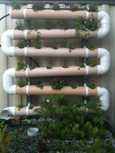 Interesante manera de regar. Cuando estarán las plantas crecidas ya no se verá el tubo que no es muy estético ...