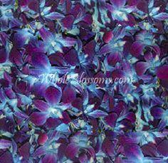 Loose Blue Dendrobium Petals - fun for the snowcones?