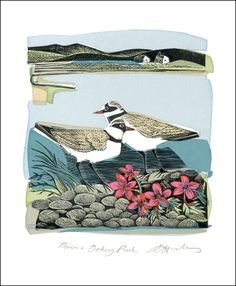 Plovers and Orkney Pinks Linocut and screen print by Angela Harding