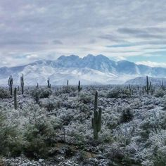 Snow in Arizona desert! Snow In Arizona, Desert Snow, Fountain Hills, Land Of Enchantment, Heaven On Earth, Science And Nature, New Mexico, Beautiful World, Natural Beauty