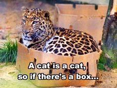 -my friends cat Alice exactly.