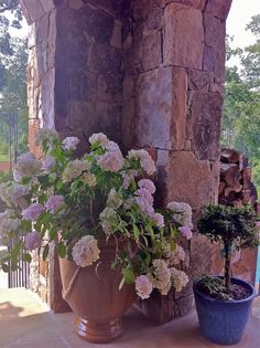 Romance on the summer porch: container garden with re-blooming Hydrangea Blushing Bride. Simple, yet stunning. Blushing Bride Hydrangea, Hydrangea Not Blooming, Summer Porch, Garden Windows, Trees And Shrubs, Better Homes And Gardens, Hydrangeas, Potted Plants, The Great Outdoors