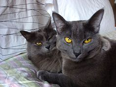 From Carole: two cute November gray cats. December reminds us of snowy weather even if we live in Florida! To honor snowflakes and frost December is all about the white cat! Send us your white cat photos so we can show the world their exquisite beauty! Send your photos and stories to catfaeries@catfaeries.com with these words in the subject line: White Cat.