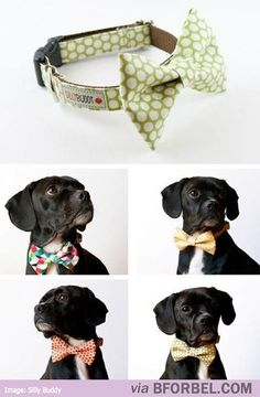 Just in case there is ever a boy frenchie in this house! bow ties for puppies! Used this general idea to make bow ties for a couple dogs in my life. I just made the bow and then a pin to attach to their regular collar. Could also be tied on with a ribbon. Party In Berlin, Chinchilla, Four Legged, Mans Best Friend, Puppy Love, Pugs, Fur Babies, Chihuahua, Cute Animals
