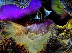 "Saatchi Online Artist Jola Mroszczyk; Painting, ""A Kind Of Music "" #art"