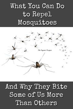 What You Can Do to Repel Mosquitoes - The Organic Prepper Bug Control, Pest Control, Avon Skin So Soft, Natural Sleep Aids, Truth Of Life, Mosquitoes, Natural Home Remedies, Natural Skin Care, Natural Health