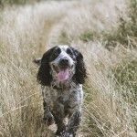 Dog friendly, self-catering holiday apartments in the heart of Mylor Yacht Harbour close to the harbour town of Falmouth in South Cornwall