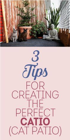 3 Tips For Creating The Perfect Catio! (Cat Patio!)
