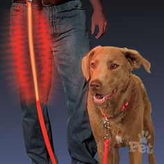 Shop Nite Ize - Nite Dawg Light-Up LED Pet Leash at Peter's of Kensington. View our range of Nite Ize online. Why in the world would you shop anywhere else for Nite Ize? Collar And Leash, Pet Collars, Nylons, Red Led Lights, Pet Dogs, Pets, Doggies, Up Dog, Pet Life
