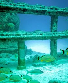 Neptune Memorial Reef is an underwater cemetery for humans that looks like the ruins of the lost city of Atlantis. The memorial reef, conceived by Gary Levine and designed by Kim Brandell, sits off the coast of Key Biscayne, Florida and has gates, benches, columns, and statues. The deceased person's cremated ashes are mixed with the cement and cast into the forms of starfish or shells and placed around the fanciful city forty five feet below the waves.
