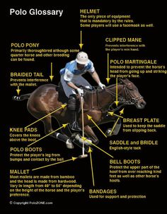 Like shown in the pin, equestrian polo demands a lot of equipment. This pin describes what each piece of equipment is and its purpose. This sport is popular in Argentina so it is interesting to learn about what goes into it. Don Corleone, Polo Horse, Polo Match, Sport Of Kings, Polo Club, Equestrian Style, Thoroughbred, Horseback Riding, Horse Riding