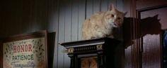 """Gatto.  sì è il suo nome. sì il pv è quel famoso """"Gatto"""". Gatto non ama camminare sul pavimento, pertanto lo si potrà vedere quasi unicamente appollaiato su credenze, mensole, sedie o persone."""
