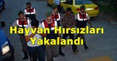 Devriye Haber : Edirne'deki Hayvan Hırsızları Yakalandı