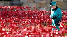 Tower of London Poppy display honoring WWI  | Frances Schultz