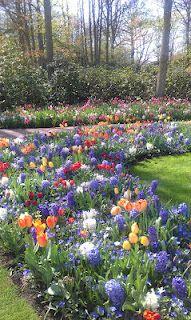 mix Stepping Stones, Outdoor Decor, Garden, Plants, Home Decor, Homemade Home Decor, Garten, Flora, Plant