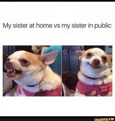 Memes Humor, Funny Memes, Hilarious, Funny Quotes, Funny Vegan Memes, Vegan Humor, Sarcasm Quotes, Humor Humour, Sarcasm Humor