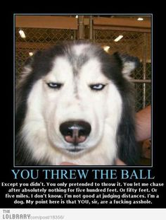 i'm pretty sure that this is what my dog thinks when i fake her out playing fetch.