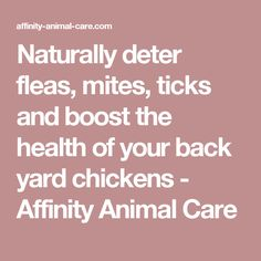 Naturally deter fleas, mites, ticks and boost the health of your back yard chickens - Affinity Animal Care