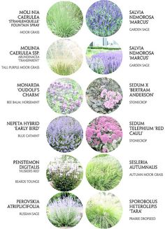 Affordable And Effective Cottage Garden Designing Methods For Your Home Your home is your world, and much like the world around us, looks are important. You may take your time to care for your house, but what about your yard? Garden Design Images, Plant Design, Landscape Design, Landscape Plans, Cottage Garden Design, Cottage Garden Plants, Dry Garden, Cottage Gardens, Fruit Garden