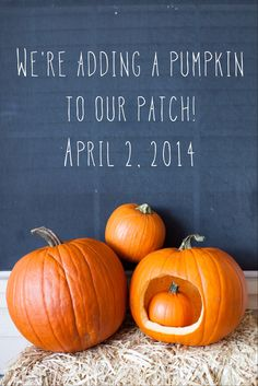 Pumpkin pregnancy announcement done with @Michele Morales Morales Morales…