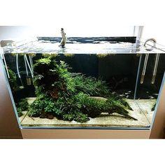 【pinokichi_0130】さんのInstagramをピンしています。 《シダやブセファランドラの陰性水槽なのでメンテナンスがすごく楽です。 #アクアリウム #水槽 #シダ》