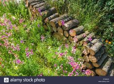 Stock Photo - A pile of wood logs in the garden Garden Arbours, Bug Hotel, Wood Logs, Garden Images, Natural Garden, Wild Things, Agriculture, Planting, Vectors