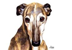 Spanish Greyhound (Galga Español) Janish Art print