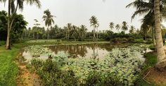 My Singapore Tour on Sunday in Pulau Ubin with my friends, it was a nice day, this island which keeps how was Singapore 50 years ago worth to be visited, you can do some biking to discover this island  #Singapore #sightseeing #pulauubin #nature #palms #lake #wanderlust #wild #panorama #photodujour #instadaily #Haze #foggy #day #nice #amazing #beautiful #landscape #nofilter #instamoment #instagood #pictureoftheday