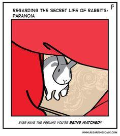 All the time Funny Rabbit, Pet Rabbit, Funny Bunnies, Baby Bunnies, Cute Funny Animals, Bunny Bunny, Jack Rabbit, Secret Life Of Rabbits, New Zealand Rabbits