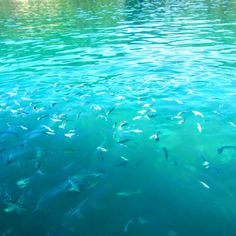 Ilha Grande Snorkel Boat Tours | Rio de Janeiro Brazil - Cheap Backpacking Ideas | Hibiscus & Nomada Backpacker Travel Guides