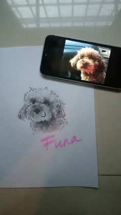 Creating an illustration of Funa the poodle