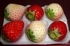 #food #fruit #japan #strawberry #whitejewel #whitestrawberry