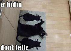 Hidden cat  -  Gato camuflado