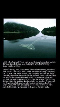 This sad story spoke to me. I believe it can be compared to humans because no wants to be the lonely whale.
