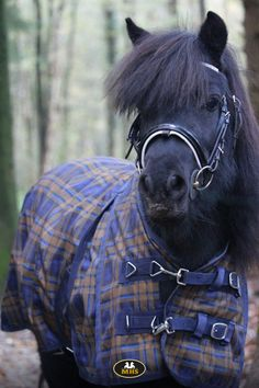 MHS Outdoor Squared fleece lining Blue Horse Supplies, Horses, Blue, Animals, Outdoor, Outdoors, Animales, Animaux, Animal