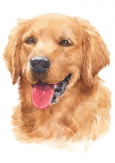 Golden Retriever Kunst, Dogs Golden Retriever, Retriever Puppy, Animal Paintings, Animal Drawings, Stock Foto, Arte Pop, Wildlife Art, Dog Portraits