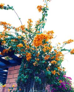 A well-deserved break from a mundane week. P.s. orange bougainvilleas for a change