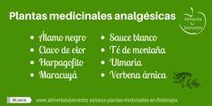 Plantas medicinales analgésicas