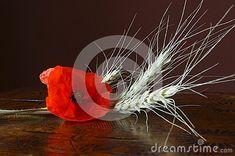 background-wildflower-red-poppy-flower