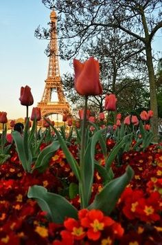Tulips By The Eiffel Tower  If you like this Like our page : https://www.facebook.com/patelcruise