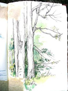 -trees - leaves - sketchbook