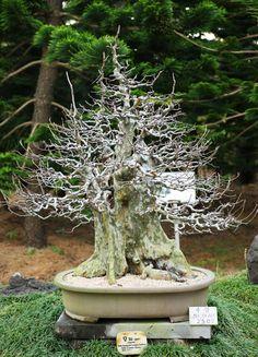 http://www.la-pierre-et-le-sabre-iaido18.fr/bonsai.htm