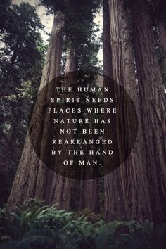 NZ Is special, not just for our culture BUT! Our wild life. And our remarkable, trees we have. Now pack your snorkles, for Hahei marine reserve. Hike up to Totara's Forest. Or visit our animal parks. To see our Native creatures, for your self.