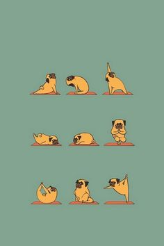 Funny Pug Doing Yoga #iPhone #4s #wallpaper