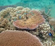 coral at Green Island Great Barrier Reef   #ecotourism #queensland #australia