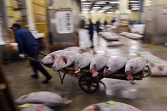 Role of Tsukiji Fish Market Wanes Despite Popularity Among Tourists