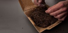 Planter sa gamelle pour faire pousser des fleurs - SoonSoonSoon