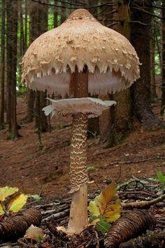 Giant Mushroom, Italy