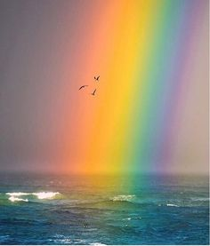 """A rain storm brought in this insane rainbow as the sun was setting. A perfect combination of light and water. Thank you Earth, you're beautiful. 🤔 Photo by: Rainbow Sky, Over The Rainbow, Rainbow Colors, Rainbow Heart, Beautiful Places, Beautiful Pictures, You're Beautiful, Rainbow Aesthetic, Northern Lights"
